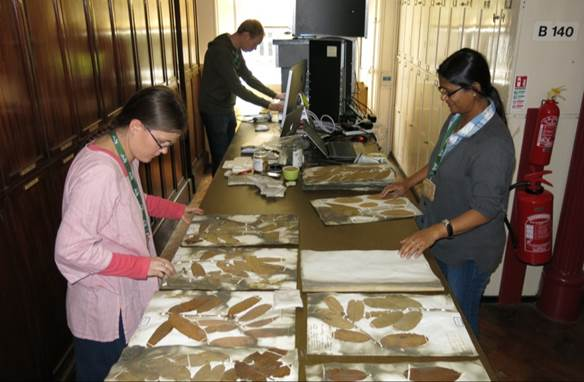 Digitisation of the Wallich Herbarium at RBG Kew