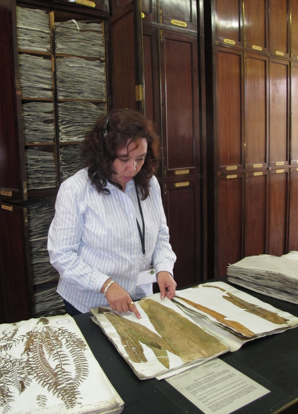 Sangeeta Rajbhandary using the EIC Herbarium at Royal Botanic Gardens, Kew
